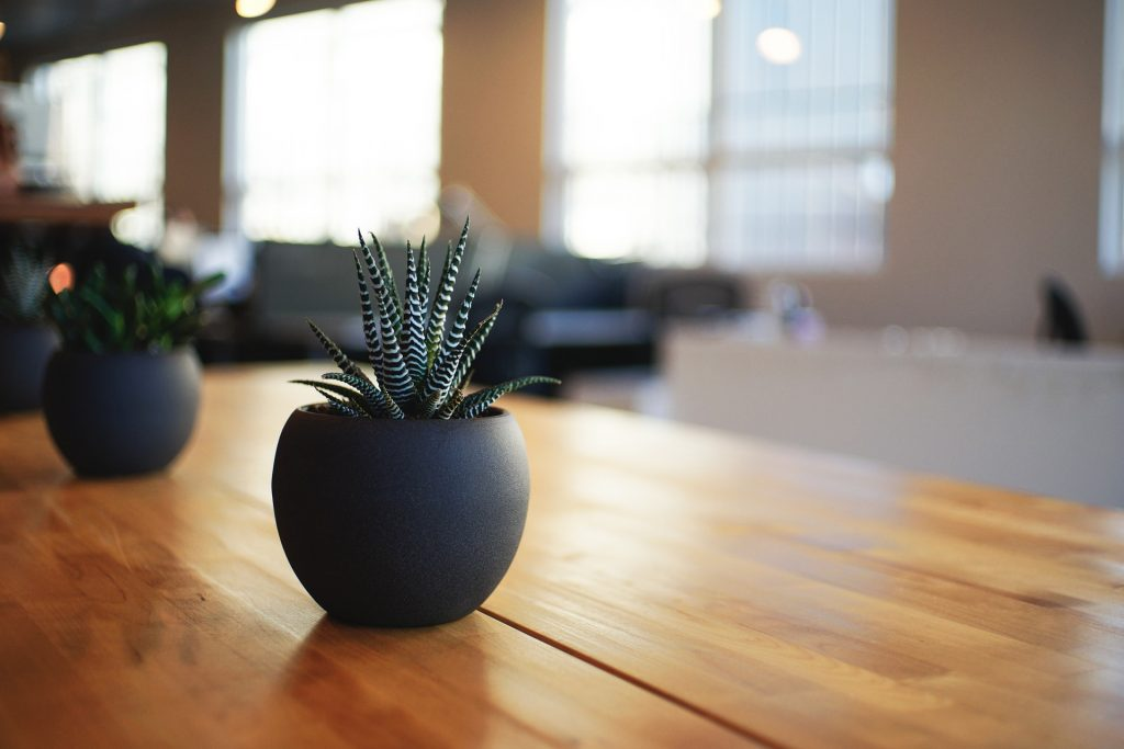 How To Take Care Of Your Indoor And Outdoor Plants?